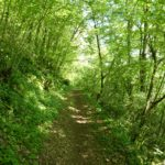 Wonderful walks through the woods along peaceful paths
