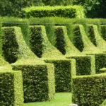 The amazing topiary of the gardens of Eyrignac